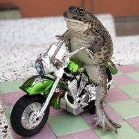 frog on motorcycle picture from ananova dot com